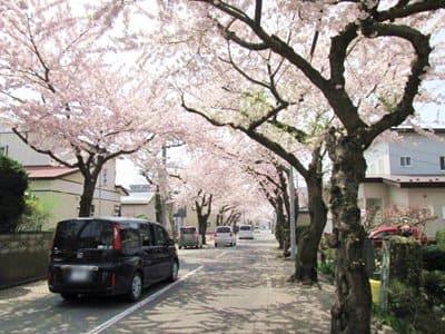 桜ケ丘通り