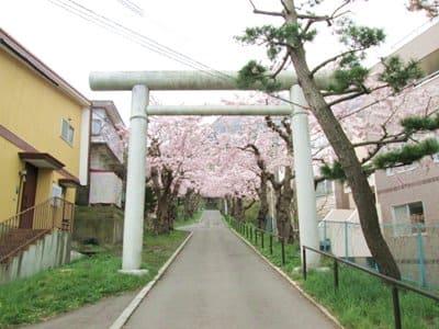 住三吉神社前の桜