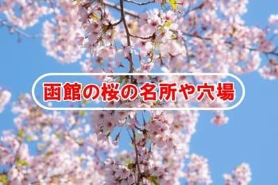 函館の桜の名所や穴場