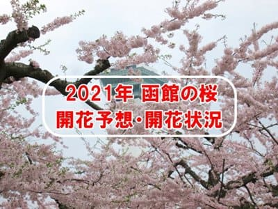 2021年函館の桜開花予想・開花状況