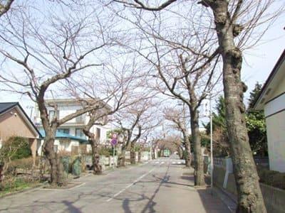 2021年4月2日の桜ケ丘通り