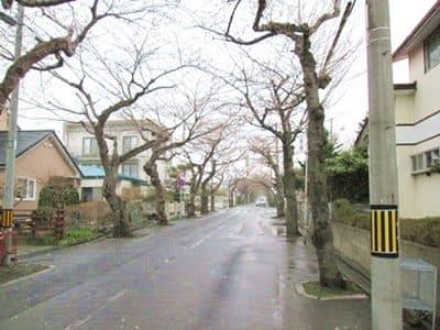 2021年4月9日の桜ケ丘通り