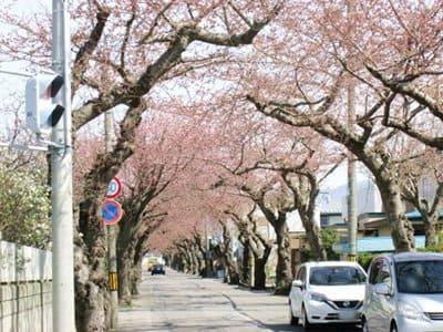 2021年4月16日の桜ケ丘通り