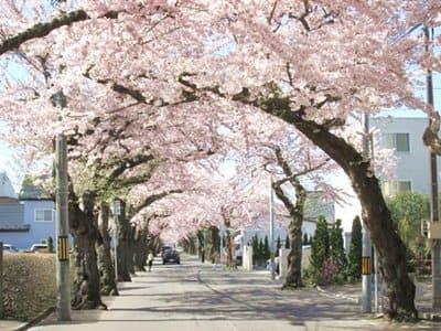 2021年4月23日の桜ケ丘通り