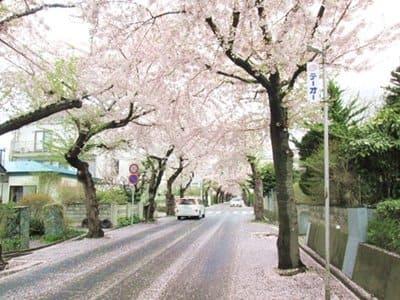 2021年4月30日の桜ケ丘通り